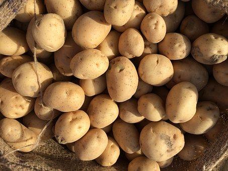 Fresh Potato, Potato, Fresh, Vegetable