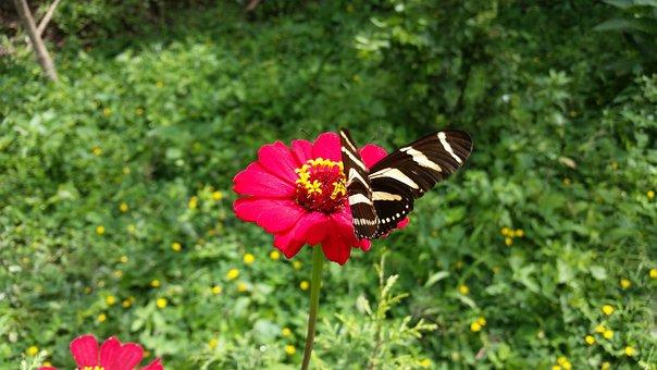 Butterfly, Garden, Flowers, Nature