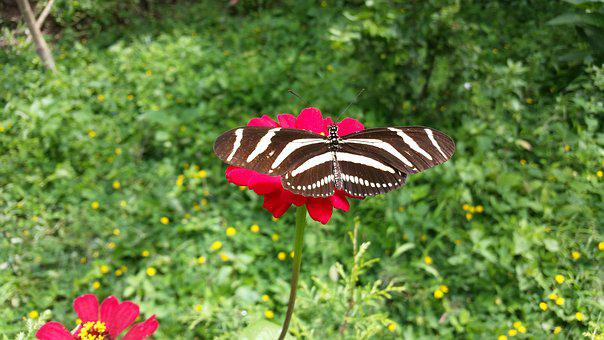 Butterfly, Flower, Insects, Spring