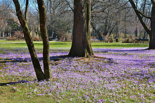 The Old Botanical Garden, Munich, Bavaria, Botany, Park