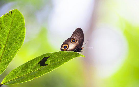 Insect, Janome Chow, Leaf, Rest, Rainforest