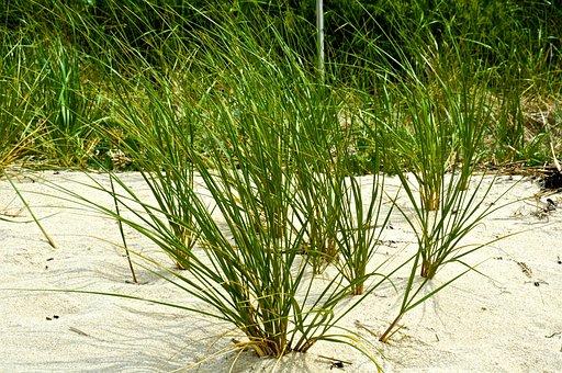 Sand, Ocean, Grass