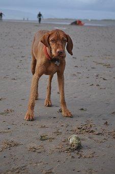 Dog, Animal, Pet, Beach, Sand, Toy, Play