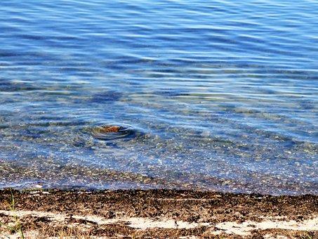 Sea, Lake, Water, Bank, Stony Underground, Tang