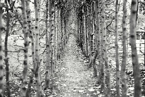 Away, Trees, Empty, Avenue, Path, Hiking, Forest Path