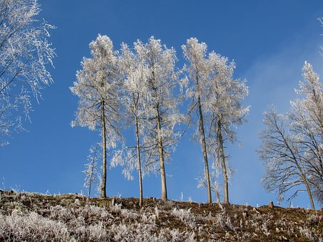 Trees, Frost, Winter, Hoarfrost, Cold
