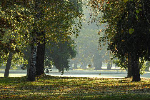 The Trees In The Fall, Autumn Park, Autumn