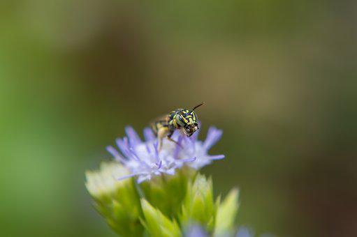 Insects, Flowers, Dec, Beautiful, Nature, Garden, Bee