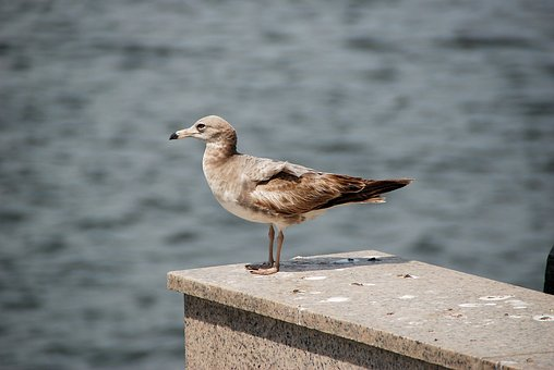 Seagull, Birds, Incheon Beach, West Coast, New, Sea