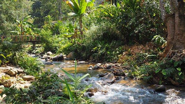 Maekampong, Chiang Mai Thailand, View, Nature, Brook