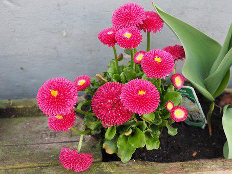 Spring Flowers, Pink, Spring, Close, Small Flowers