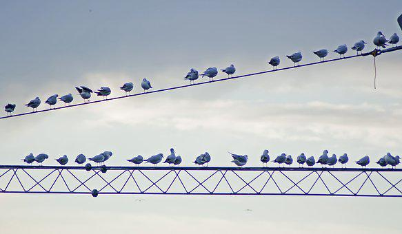 Birds, Wire, Day, Sky, Clouds, Animal, Nature, Cable