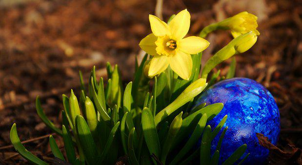 Narcissus, Egg, Easter, Yellow, Tete A Tete, Easter Egg