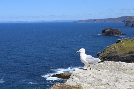 Cornwall, Tintagel, Coast, Uk, England, Sea, Ocean