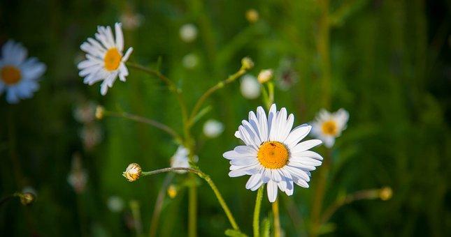 Flower, Green, Floral, Nature, Spring, Design, Plant
