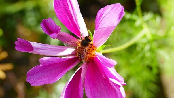 Purple, Flower, Bee, Purple Flowers, Purple Flower