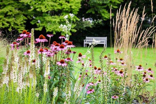 Park Bench, Park, Spring, Rest, Flowers, Plant, Pink