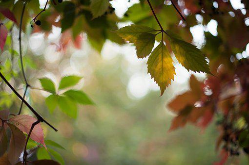 Autumn, Nature, Forest, Leaf