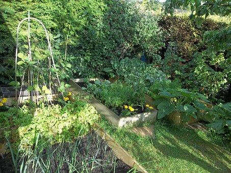 Garden, Vegetables, Produce