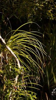 Rainforest, Grass, Back Light, Lichtspiel, Grasses