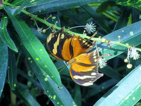 Butterfly, Insect, Butterfly House, Mainau Island