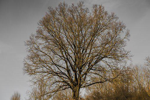 Crown, Aesthetic, Tree, Sky, Branches, Nature, Leaves