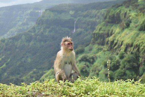 Animal, Monkey, Wild, Nature, Jungle, Bear, Forest