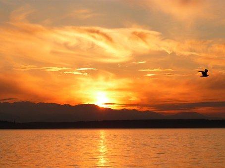 Sunset, Bird, Orange, Sun, Night, Bay, Clouds, Sky