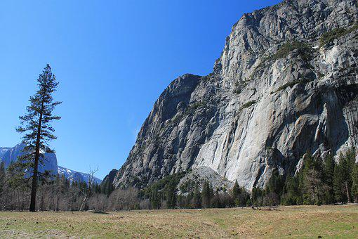 El Capitan, Yosemite, Tree, Park, California, National