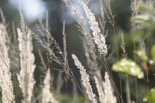 Nature, Plants, Forest, Summer, Grass