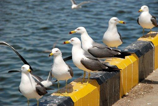 Seagull, Animal, New, Wildlife, Sea, Wing, Sea Birds