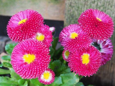 Macro, Pink, Blossom, Bloom, Flower, Close, Spring