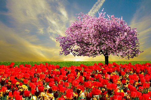 Emotion, Spring, Spring Fever, Sky, Tulips, Nature