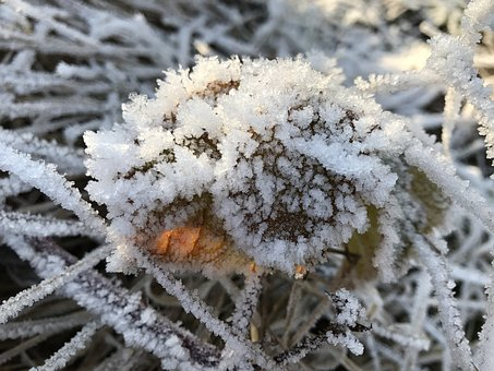 Frost, Wintry, Cold, Hoarfrost, Icy, Winter Magic