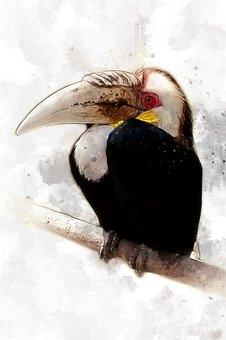 Hornbill, Bird, Animal, Tropical, Rainforest, Fauna