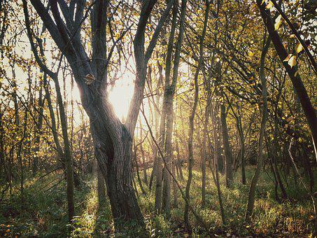 Woods, Trees, Nature, Autumn, Fall, Sunlight, Season