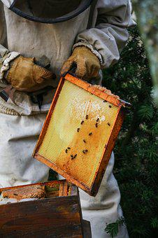 Beekeeper, Honey, Hive, Bees, Nature, Insect, Cell