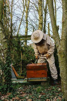 Beekeeper, Honey, Hive, Bees, Nature, Beekeeping