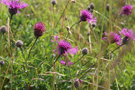 Cornwall, Flowers, Pink, England, Flora, Wild, British