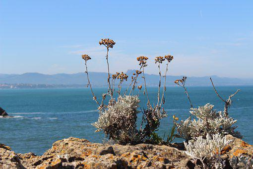 Plant, Sea, Mountains, Dried, Grasses, Flower