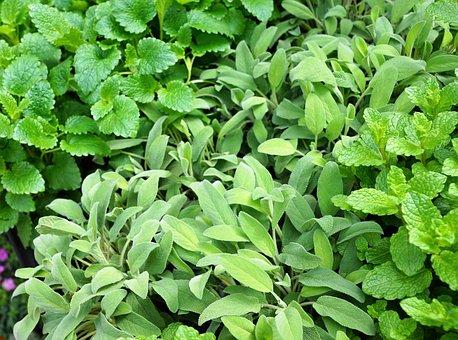 Sage, Spice, Green, Food, Eat, Plant