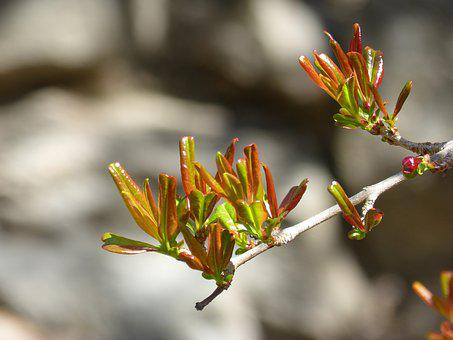 Branch, Outbreak, Spring, Sprout, Bud Tender, Granada