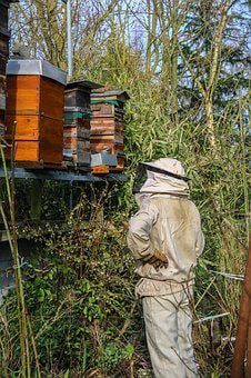 Beekeeper, Honey, Hives, Bees, Nature, Beekeeping