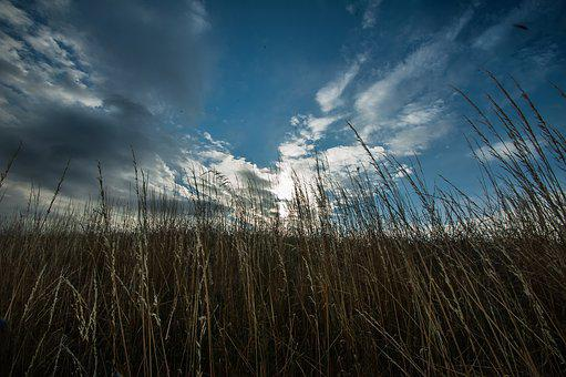 Grass, Clouds, Horizon, Nature, Mood, Landscape