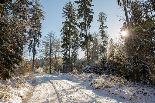 Road, Snow, Forest, Trees, Landscape, Snowy, Nature