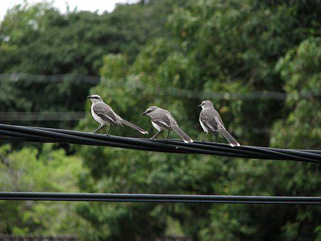 Birds, Nature