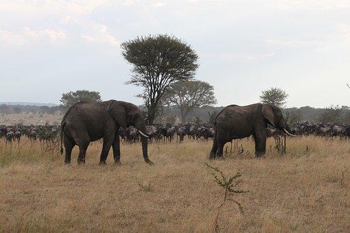 Africa, Safari, Wildlife, Kenya, Tanzania, Seringeti
