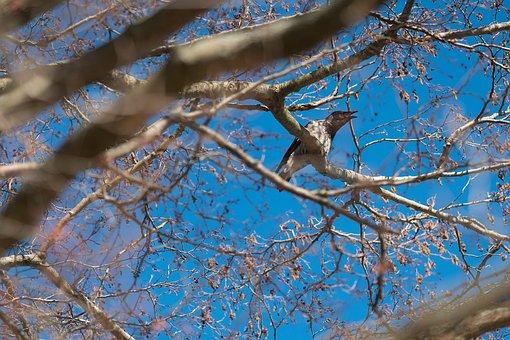 Crow, Tree, Bird, Black, Nature, Sky, Raven, Blue