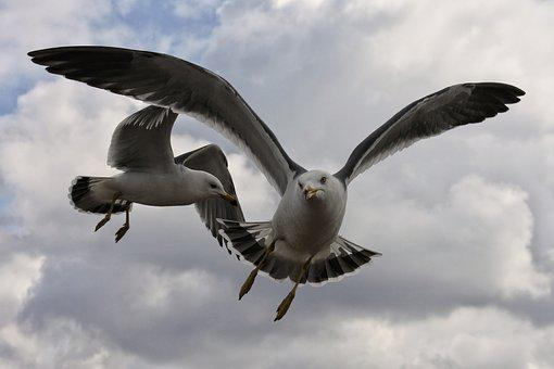 Animal, Sky, Cloud, Coast, Beach, Sea Gull, Seagull