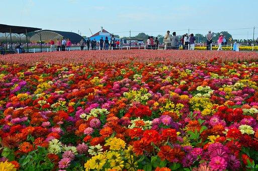 Zte Ridge, Stinky Ju, Sea Of Flowers